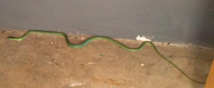 Snake2_21November17